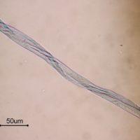 Baumwollfasergewebe